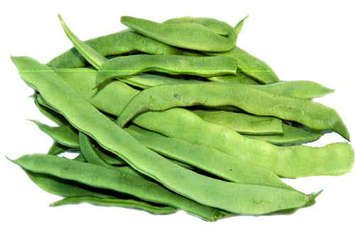 Bush Snap Beans